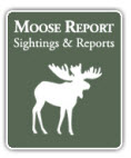 Moose Resort by NEOC