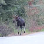 Moose Tour NEOC