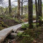 Katahdin loop trail
