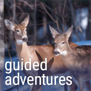 guided-adventures