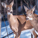 guided wildlife trips