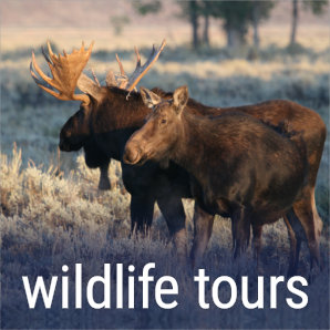 wildlife-tours